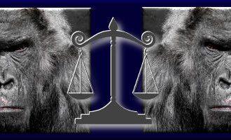 Bernhard Lassahn: Der Affe und die Männerrechtler