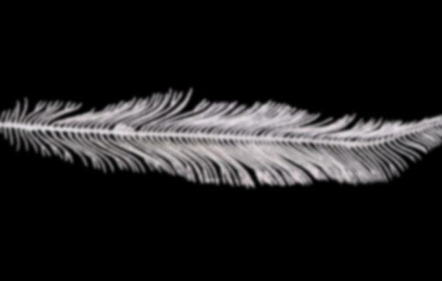 white feather - weiße Feder - Faktum Magazin