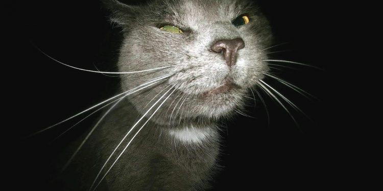 hate cat - Hasskatze - Faktum Magazin