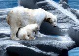 Eisbär - Klimawandel - Faktum Magazin